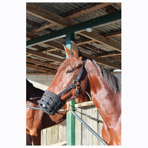 Horse Muzzle Equivet Pony