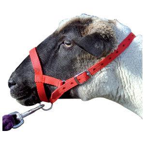 Halter Webbing Sheep Small Red