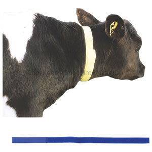 Calf Neck Bands Blue 10-pack
