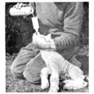 Lamb Reviver Roslam each