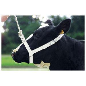 Halter Webbing Cow White