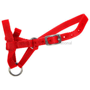 Halter Webbing Alpaca Large Red
