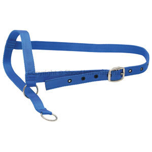 Halter Nylon Cow Leading Blue
