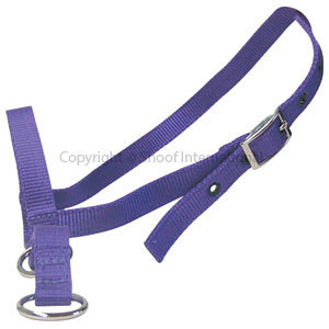 Halter Nylon Calf Tethering Purple