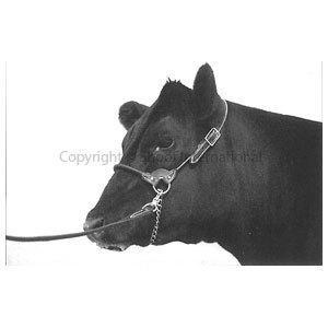 Halter Leather Round Strap Cow Black