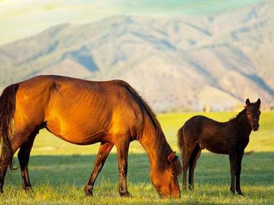 Animal Health - Horses