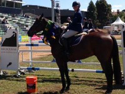 Livestock Equipment (Horses)
