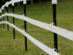 Electric Fencing (Cattle)