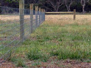 General Fencing (Sheep and Goats)