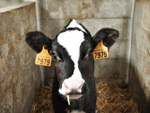 Cattle Marking & Identification Products