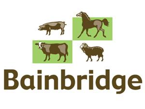 Bainbridge Vets